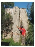 The Otway Giant Tree